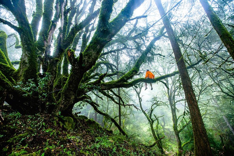 森の中の大木のひと枝に腰掛ける人 大自然の中 神秘的な写真